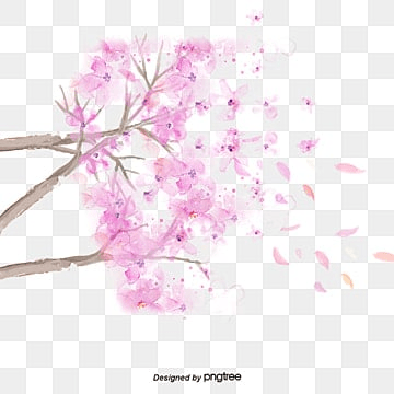 Blooming cherry tree, Cherry Blossom,sakura, Cherry, Cherry Blossom PNG and PSD