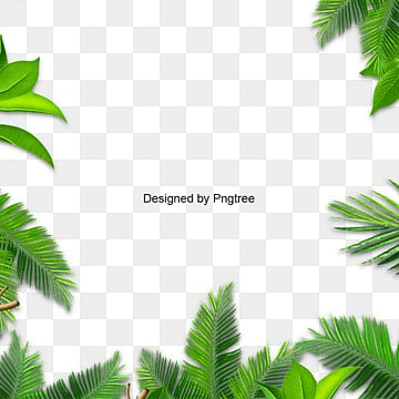 leaves palm, Green Leaf, Leaves Vector, Background PNG and Vector