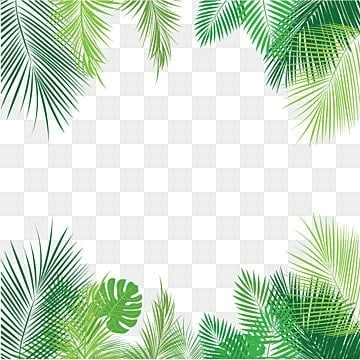 tropical png  vectors  psd  and clipart for free download cactus clipart black and white cactus clip art free border