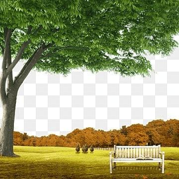 Garden Background Png