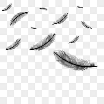 falling feathers png images vectors and psd files free download