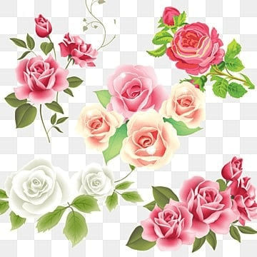 White Rose Png, Vector, PSD, and Clipart With Transparent