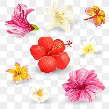 Flower Vector Png Vector Psd And Clipart With Transparent Background For Free Download Pngtree