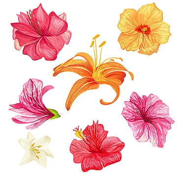 Hibiscus and lily flowers., Flower, Hibiscus, Set PNG and Vector