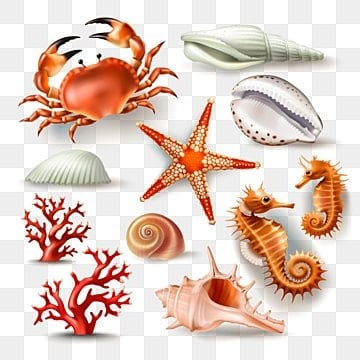 Set of vector illustrations seashells, coral, crab and starfish, Shell, Sea, Seashell PNG and Vector