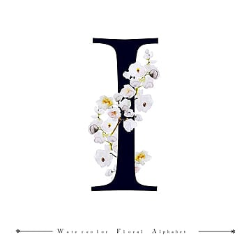 I Alphabet Letter Watercolor Floral Background Color Painted PNG And Vector