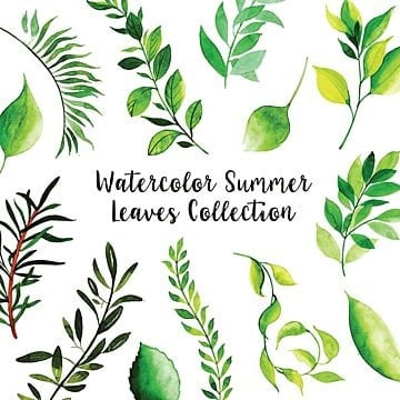 summer leaves png images vectors and psd files free