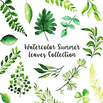 watercolor summer png images vectors and psd files