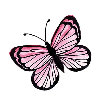 Butterfly PNG Images, Download 8,639 PNG Resources with Transparent