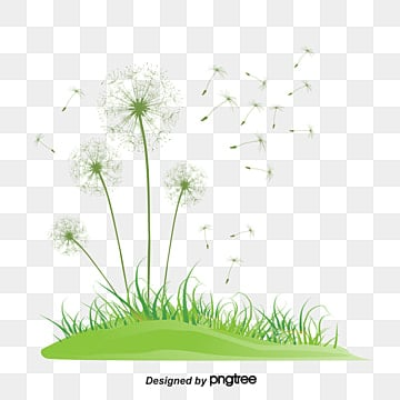 Dandelion png images download 1452 png resources with transparent dandelion mightylinksfo