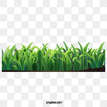 Grass, Grass PNG and PSD