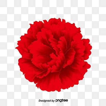 2632956156367 flower festival, Red Carnation Flowers, Mother's Day, Flowers PNG and PSD