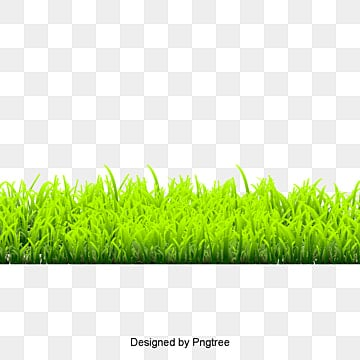 grass, Grass, Grass, Lawn PNG and PSD