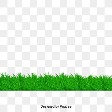 Grass, Grass, Green Grass, Green PNG and PSD