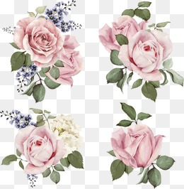 Hand-painted roses, Cartoon, Vector, Hand Painted PNG and Vector