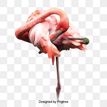 flamingos png images vectors and psd files free free ai vector art free ai vector art