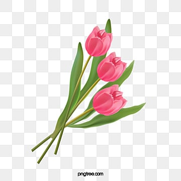 tulip, Tulip, Flowers, Bouquet PNG and Vector