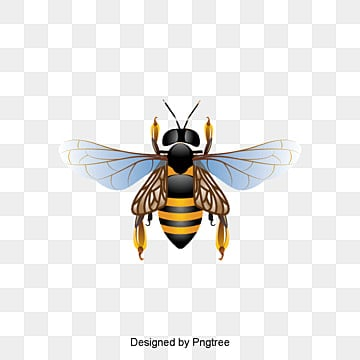 Bee Vector Cute PNG And