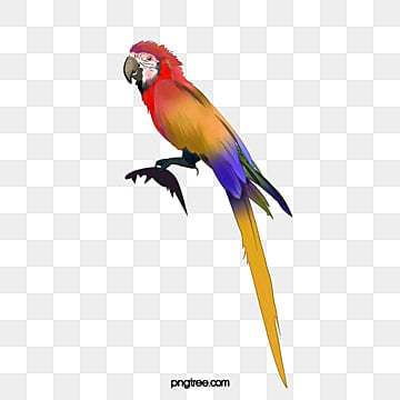 Parrot Png, Vector, PSD, and Clipart With Transparent