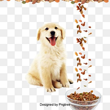 Pet dog, Dog, Pet, Animal PNG Image