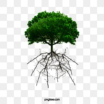 Tree PNG Images, Download 55,743 PNG Resources with Transparent
