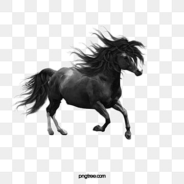 Horse PNG Images, Download 3,049 Horse PNG Resources with