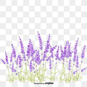 Lavender background, Lavender Background, Hand-painted Floral Background, Purple Flower Material PNG and PSD