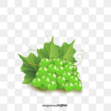 Grapes Clipart transparent background PNG cliparts free download   HiClipart