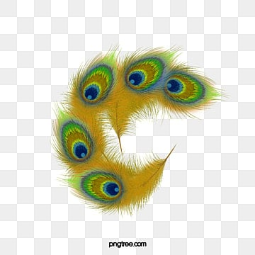 Peacock Feather Png, Vector, PSD, and Clipart With