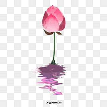 Lotus flower png images vectors and psd files free download on lotusflowersflowers lotus flowers flower png image and clipart mightylinksfo
