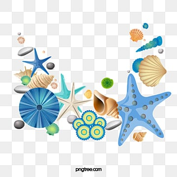 Sea Shell Png Images Vectors And Psd Files Free