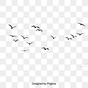 Birds, Birds, Animal, Birds PNG Image