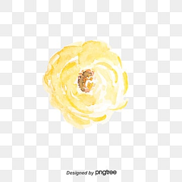 White rose png images vectors and psd files free download on pngtree white rose white rose flowers white png image and clipart mightylinksfo