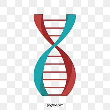 dna material, DNA, Vector, Rotation PNG and Vector
