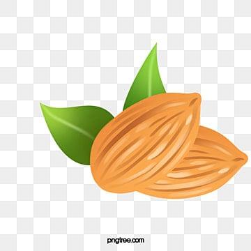 almond vector