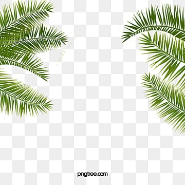 Leaf background, Leaf Background, Advertising, Palm Tree PNG and Vector