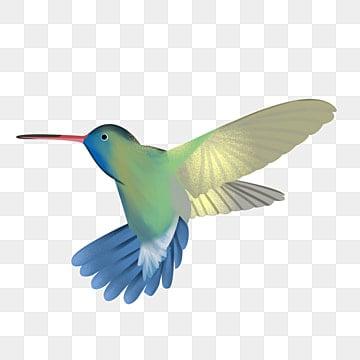 hummingbird vector png images vectors and psd files free