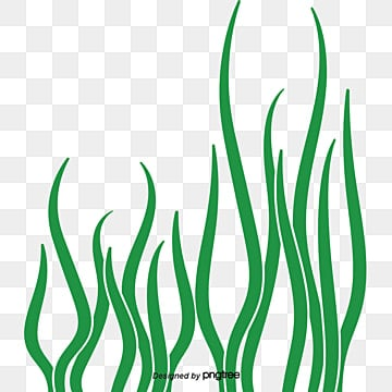 Seaweed Png Images Vectors And Psd Files Free Download