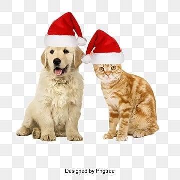 عيد الميلاد,هالوين,عيد الميلاد القبعات, عيد الميلاد, هالوين, كلب عيد الميلاد القبعاتPNG صورة