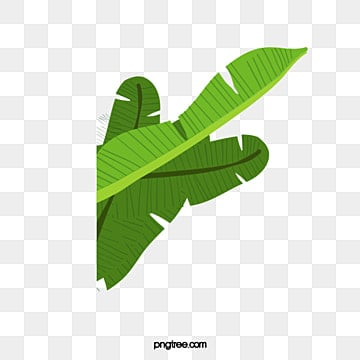 Banana Leaves Green PNG Image And Clipart