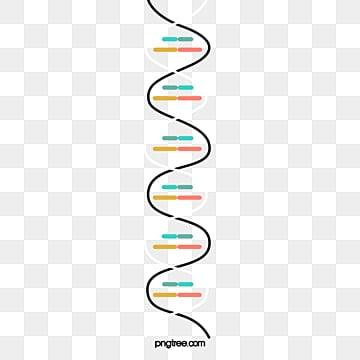 ADN, Experimento, La Ciencia, Composición Química PNG y PSD