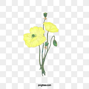 Yellow Watercolor Flowers Png Vectors Psd And Icons For