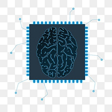 human brain png images vectors and psd files free