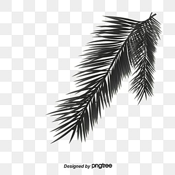 palm tree vectors
