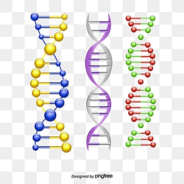 dna structure model, Dna, Structure Model, Double Helix PNG and PSD
