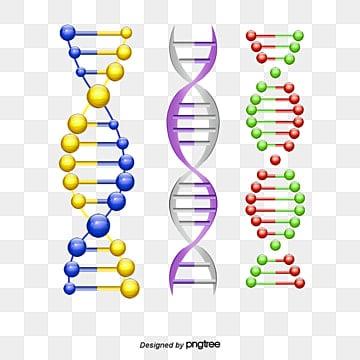 Modelo de la estructura del ADN, Modelo De La Estructura Del ADN Material, Modelo De Estructura De ADN Plantilla Descargar, ADN PNG y PSD