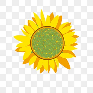 Sunflower png images download 5421 png resources with transparent sunflower sunflower yellow flowers yellow png image and clipart mightylinksfo Choice Image