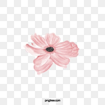 Watercolor flowers png vectors psd and clipart for free download beautiful pink flowers in full bloom flowers plant watercolor flowers png image and mightylinksfo