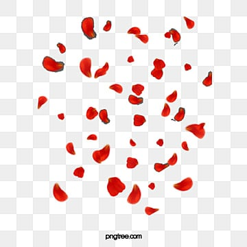 falling petals png images vectors and psd files free download on
