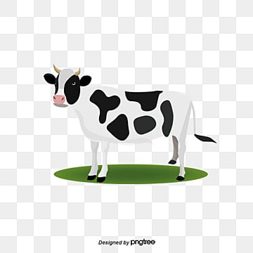 Vector Cows, Dairy Cow, Cartoon Cow, Animal PNG and Vector